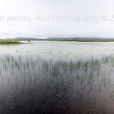 Lilly pond South Uist